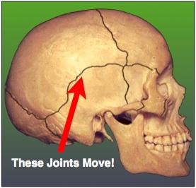 Cranial Subluxations