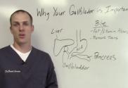 Digestion - Gallbladder Important